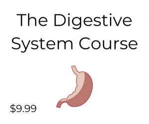 Digestive System Course